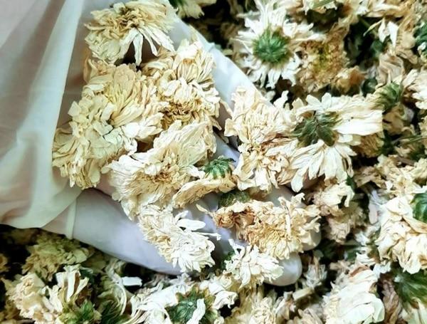Hoa cúc khô giúp an thần, giảm căng thẳng, lo âu, chống trầm cảm