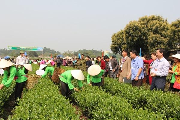 Mỗi năm Trại Cài cung cấp cho thị trường gần 700 tấn chè búp khô - Chương trình Ngày hội văn hóa trà vùng chè Trại Cài
