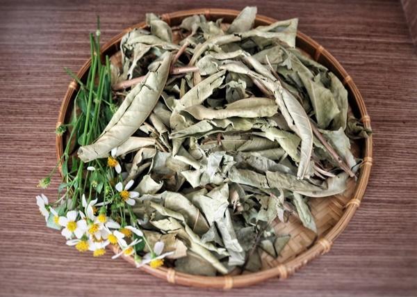 Khi pha trà từ lá vối khô, bạn cần cắt nhỏ, rửa qua cho sạch
