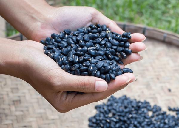 Đậu đen là nguyên liệu quen thuộc trong trà ngũ cốc tâm sen