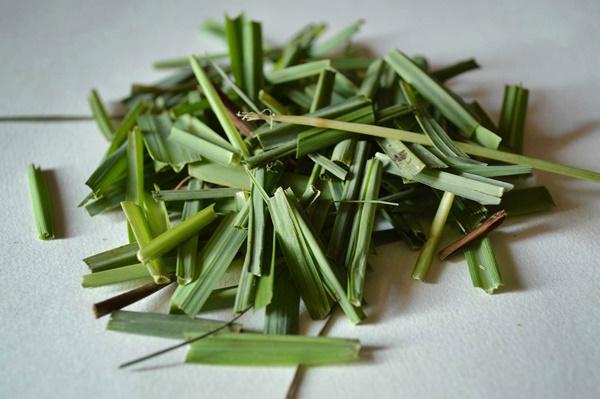 Lá sả có rất nhiều tinh dầu thơm tốt cho bệnh cảm